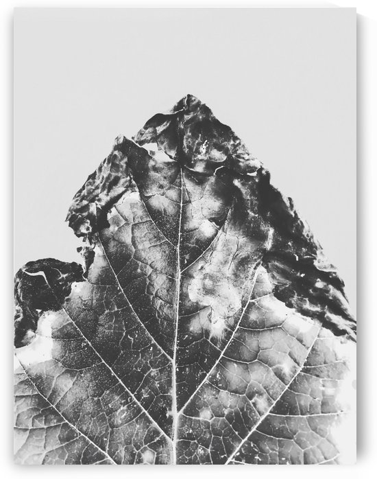 leaf texture background in black and white by TimmyLA