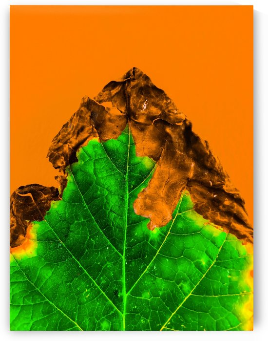 close up burning green leaf texture with orange background by TimmyLA