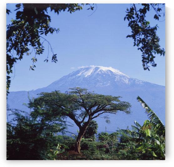 Mt. Kilimanjaro,Moshi,Tanzania by PacificStock