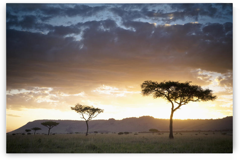 Trees And Animals Across An African Landscape At Sunset; Kenya by PacificStock