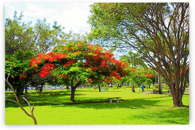 St Kitts Independence Square 6 by Keethton J France