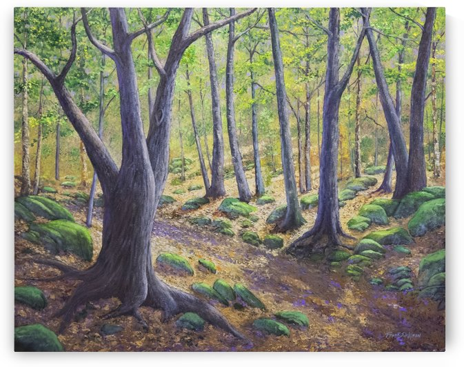 Vermont Woodland Spring by Frank Wilson