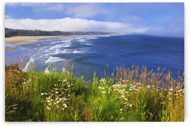 Wildflowers Along Yaquina Head; Newport Oregon United States Of America by PacificStock