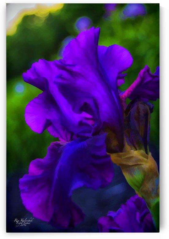Purple Iris2 by Light Seeker