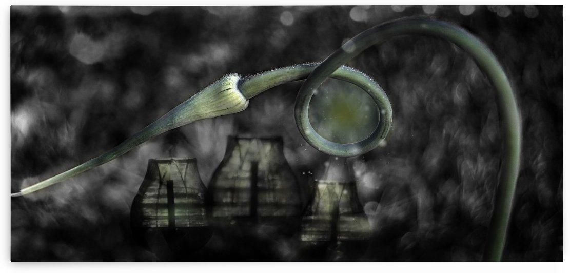 Garlic Lanterns by Light Seeker