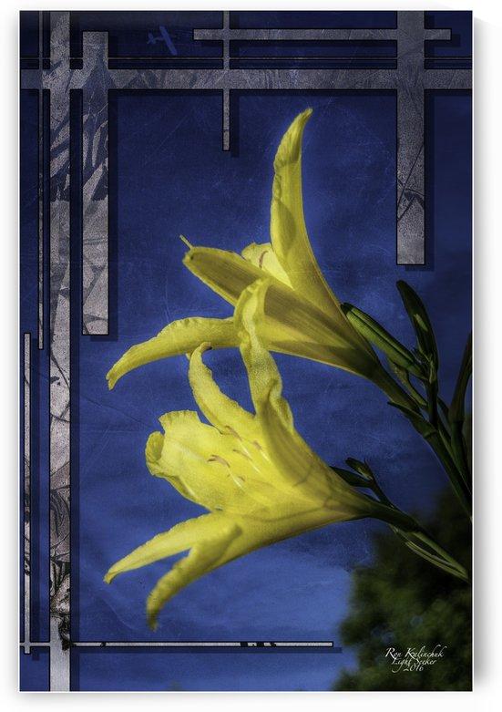 YellowDayLilies2 by Light Seeker