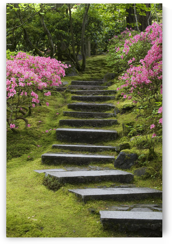 Rock Stairway Along A Moss Covered Hill With Flowering Bushes; Portland Oregon United States Of America by PacificStock
