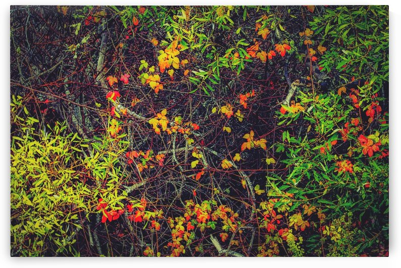 red yellow orange and green leaves background by TimmyLA