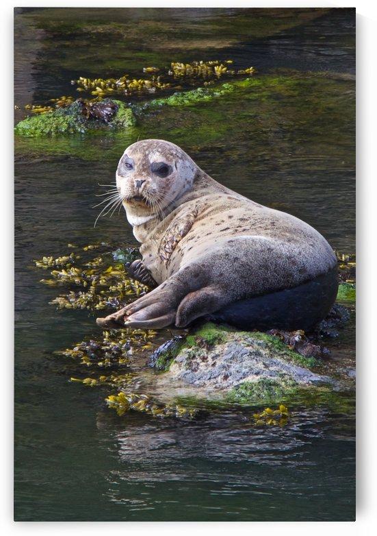 Sea lion portrait near Depoe Bay, OR by Craig Nowell Stott