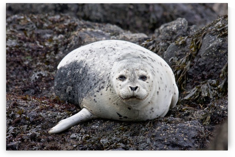sea lion near Newport, OR by Craig Nowell Stott
