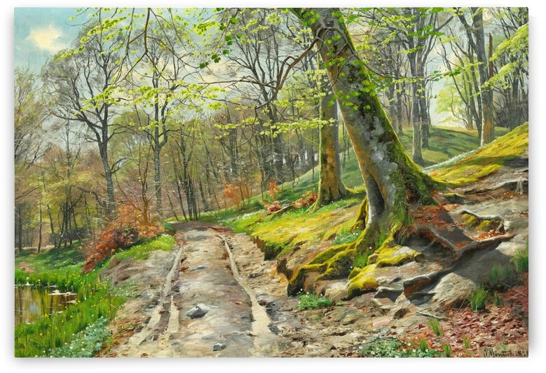 A day in the forest with flowering anemones by Peter Mork Monsted