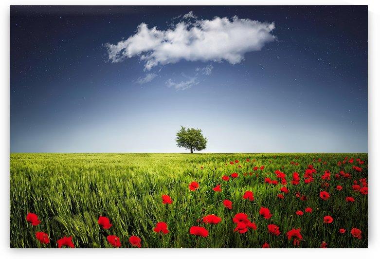Lone tree a poppies field by Bess Hamiti