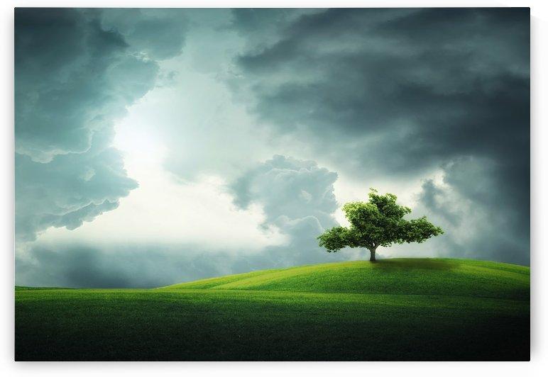 Lonely tree by Bess Hamiti