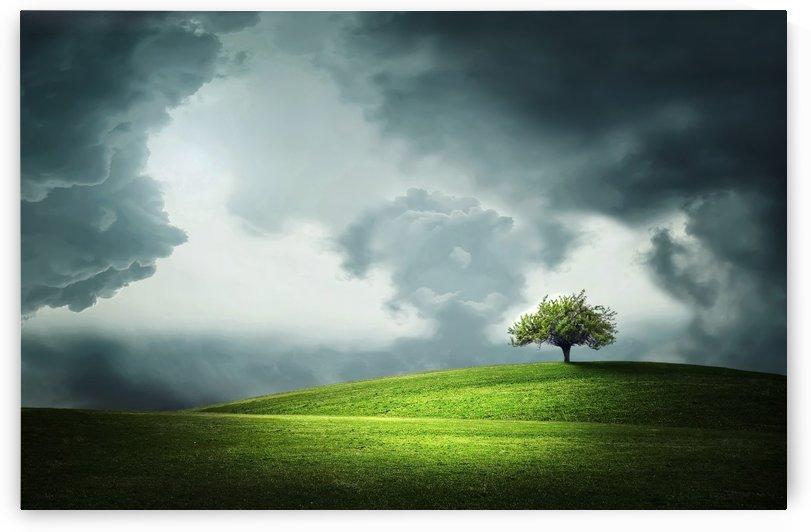 7 Lonely Tree DIGITAL PHOTO by Bess Hamiti