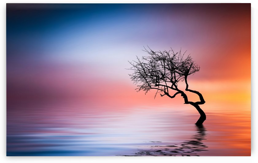 Tree at lake by Bess Hamiti