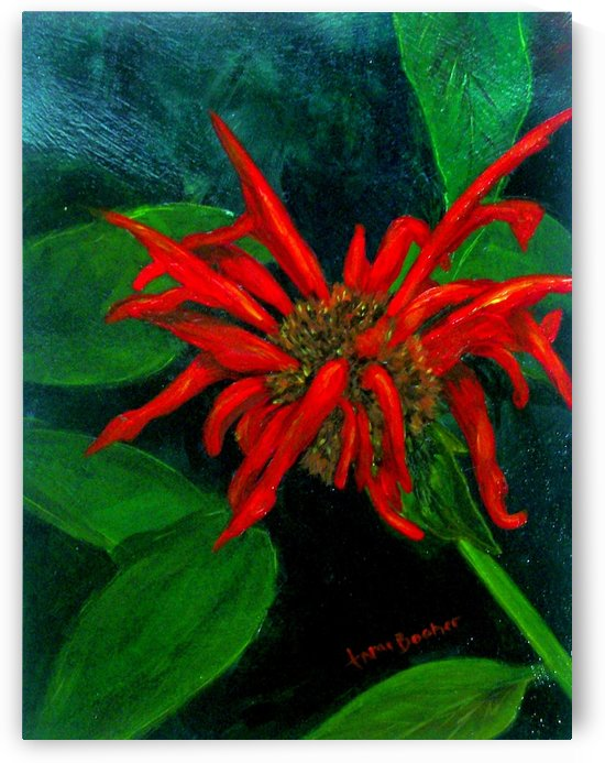 bee balm  by Tami Booher Appalachian Nature Painter