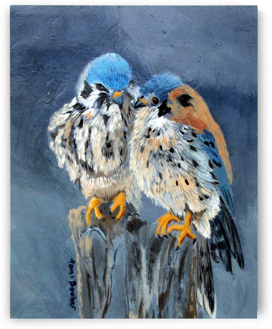 american kestrels by Tami Booher Appalachian Nature Painter