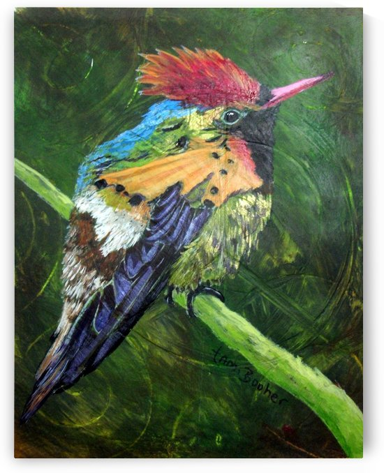 Tufted Coquette Hummingbird by Tami Booher Appalachian Nature Painter