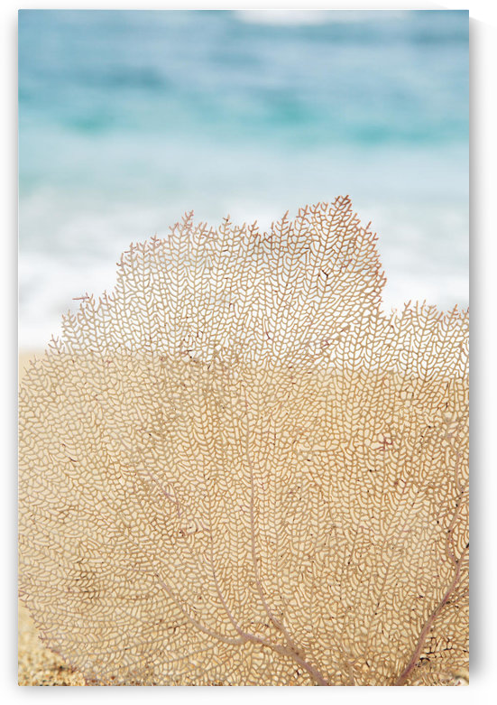 Hawaii, Oahu, Turquoise Ocean With Beautiful Coral Element On The Sand. by PacificStock