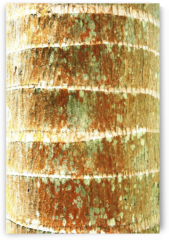 Hawaii, Oahu, Close-Up Of Coconut Palm Tree Bark Texture. by PacificStock