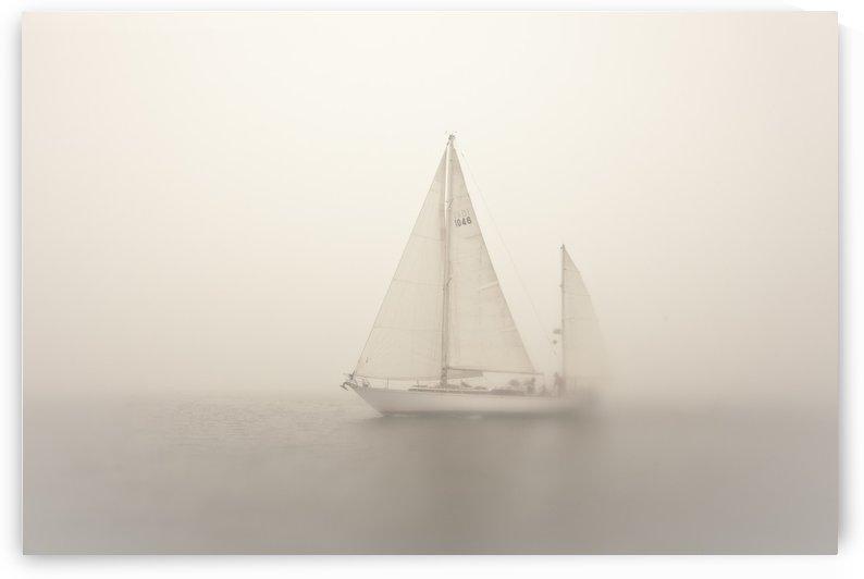 ©LouFreeman Coastal Maine 1020 60 by Lou Freeman