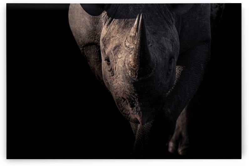 BRAVE by inXS Wildlife