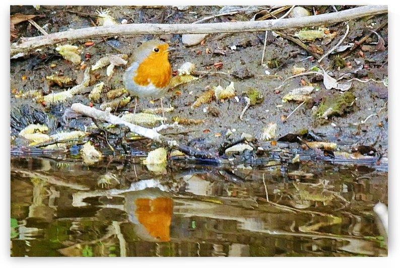 Reflective Robin by Andy Jamieson