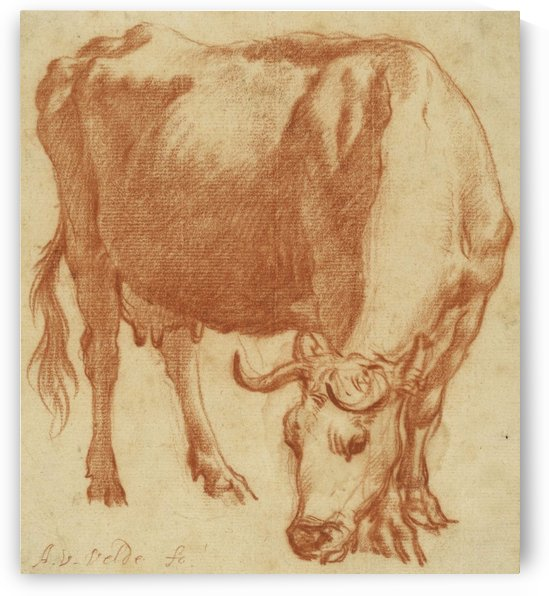 A cow grazing 1663 by Adriaen van de Velde