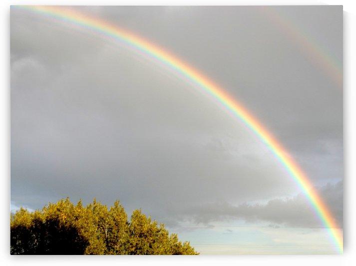 Landscape, photography - Double rainbow on Roman sky with tree - The Roman landscape, Rome, Italy, photography by Alessandro Nesci