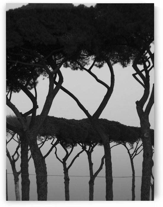 Landscape Photography, Italy - Landscape with trees, pines, black and white - The Roman landscape, Rome, Italy, photography  by Alessandro Nesci