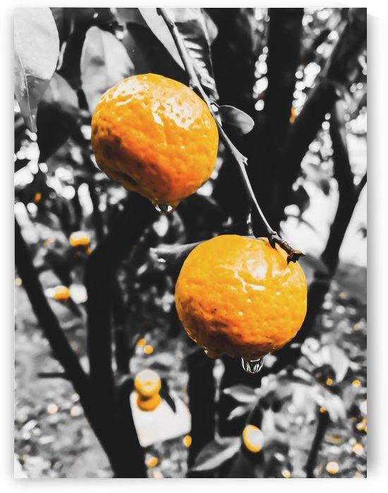 fresh orange fruit in the garden by TimmyLA