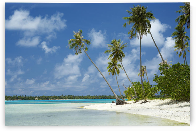 French Polynesia, Tahiti, Lagoon Beach With Palms Trees and Blue Sky; Maupiti by PacificStock