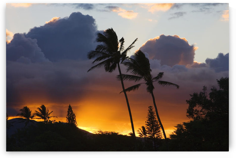 USA, Hawaii, Maui, puffy clouds at sunset; North Shore, Palm trees on hill by PacificStock