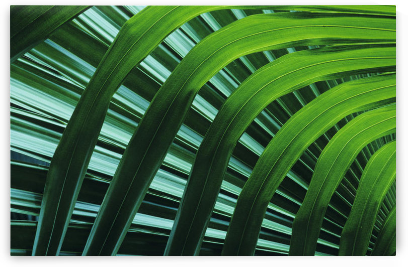 Hawaii, Palm Frond Close-Up In Tropical Botanical Gardens. by PacificStock
