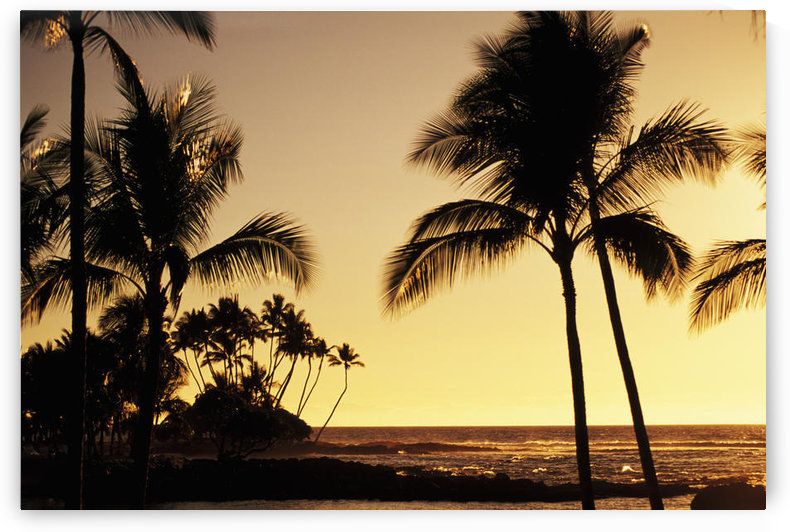 USA, Hawaii, Ocean and silhouetted palm trees at sunset in Mauna Lani Resort; Big Island by PacificStock