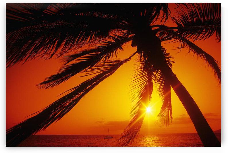 Hawaii, Maui, Kihei, Charley Young Beach, orange sunset thru palm silhouette by PacificStock