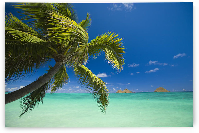 USA, Hawaii, Oahu, Mokulua island in background; Lanikai, Palm tree over Pacific Ocean by PacificStock