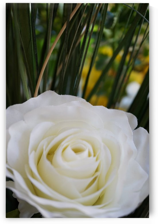 White rose with green by Babett-s Bildergalerie