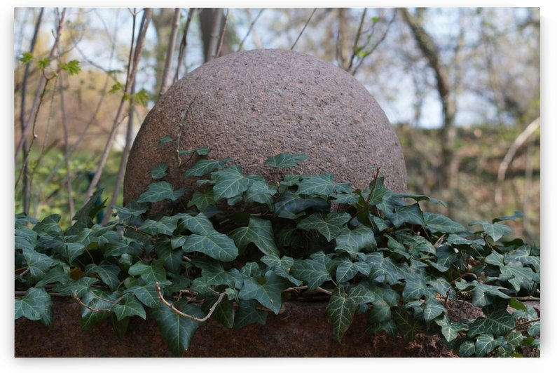 stone ball with ivy ranks by Babett-s Bildergalerie