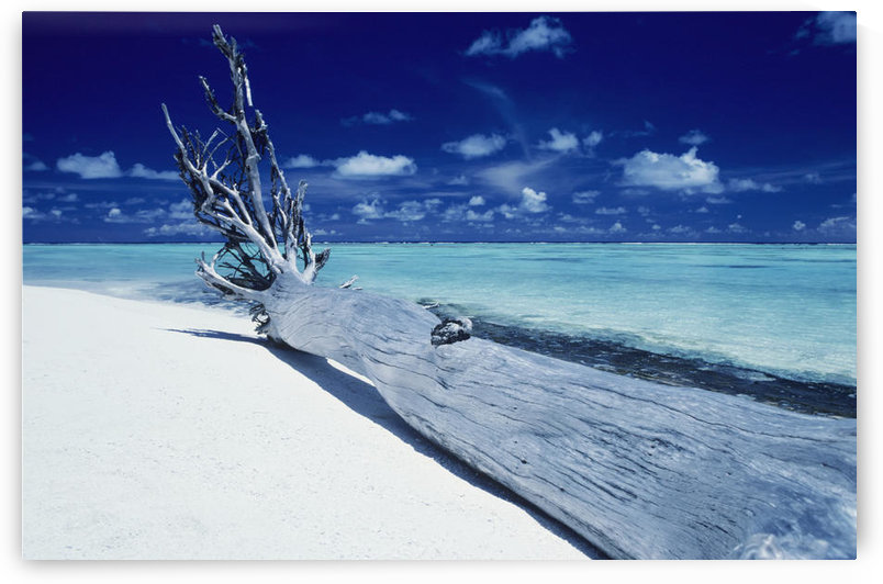 French Polynesia, Tetiaroa (Marlon Brando's Island), Driftwood On White Sand Beach. by PacificStock