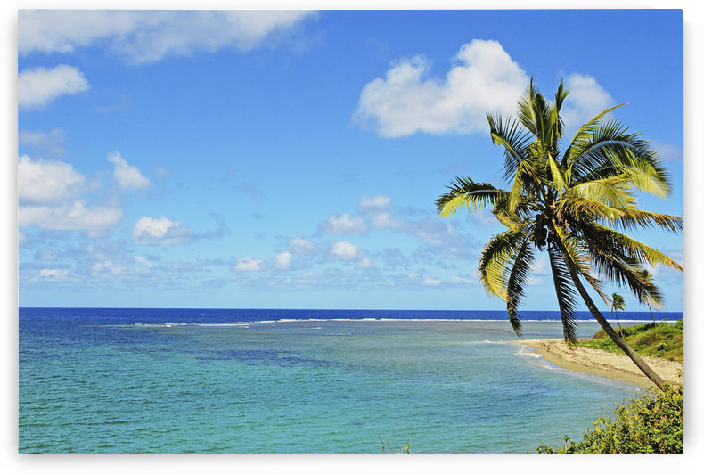 Fiji, Blue And Turquoise Ocean With Palm Tree And Sandy Beach. by PacificStock