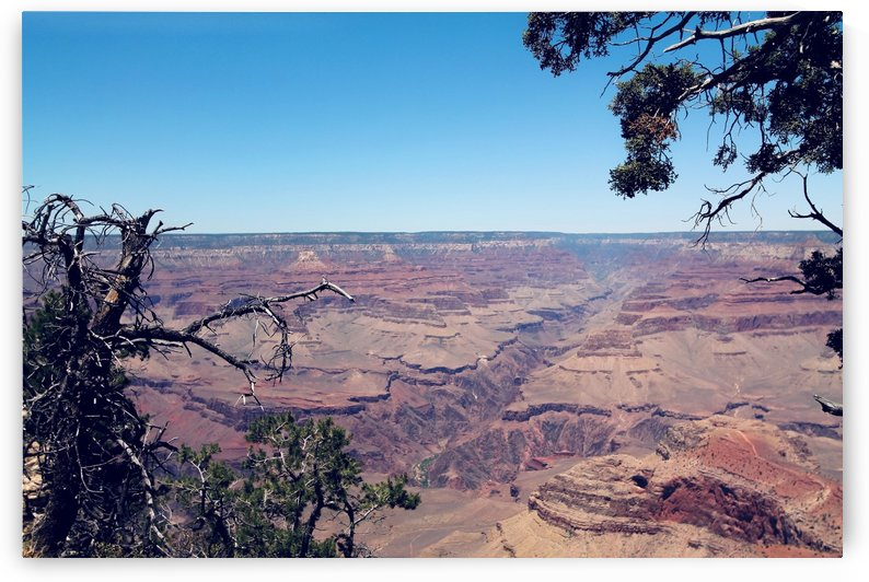 desert at Grand Canyon national park, USA in summer by TimmyLA