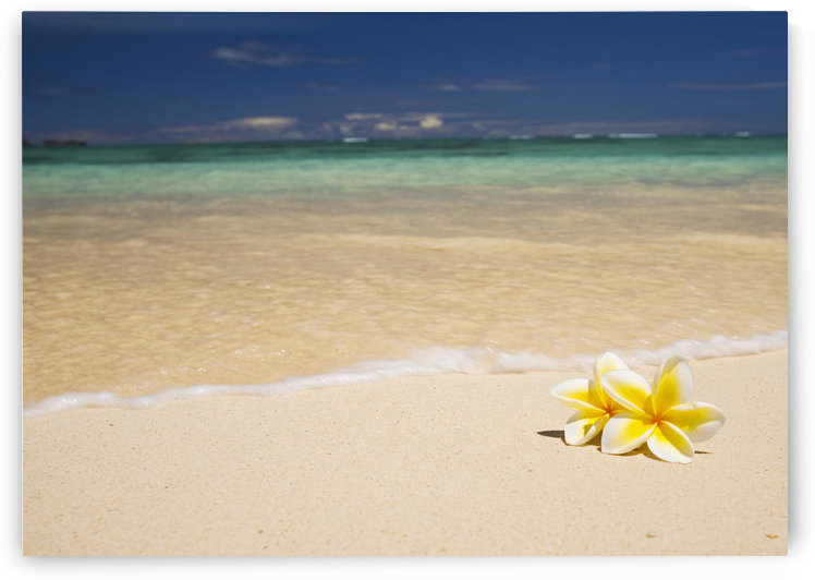 Hawaii, Oahu, Lanikai Beach, Two Plumerias Resting On The Sand Of A Gorgeous Tropical Beach. by PacificStock
