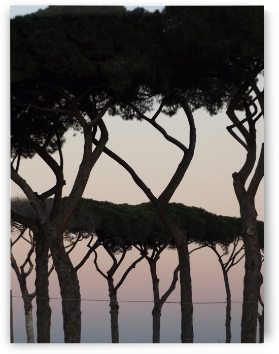 Italy, Landscape photography - Landscape with trees, pines - The Roman landscape, Rome, Italy, photography by Alessandro Nesci