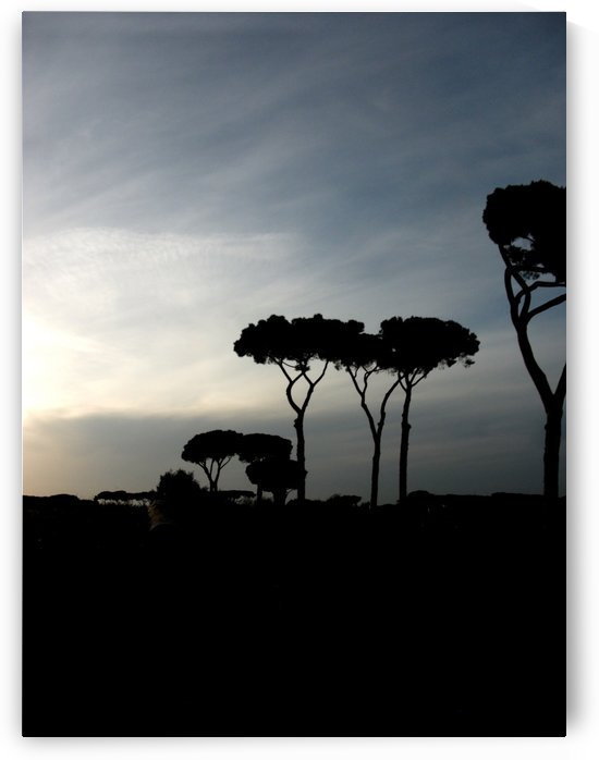 Landscape photography, color - Landscape with trees, pines - The Roman landscape, Rome, Italy, photography by Alessandro Nesci