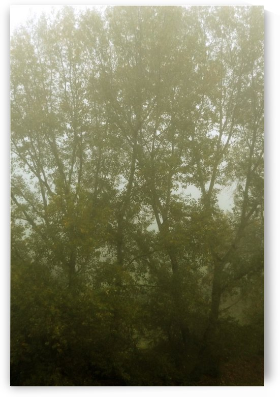 Photography Landscape - Misty landscape with big tree, between the branches - The Roman landscape, Rome, Italy, photography by Alessandro Nesci