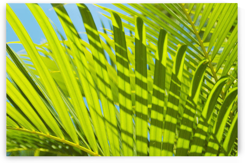 Close-Up Detail Of Light Green Palm Leaves With Shadow Pattern Against Blue Sky by PacificStock