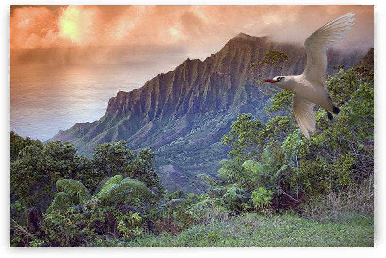 Hawaii, Kauai, Na Pali Coast, Kalalau Valley And Kaaalahina Ridge, View From Kokee State Park Lookout With Bird Flying Through Foreground by PacificStock