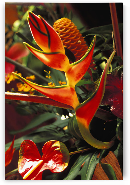 Beautiful Tropical Bouquet Flower Arrangement With Heliconia And Ginger by PacificStock