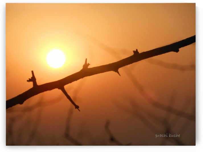 Nature at its best ! by Prachi Pushkar Buche Marathe